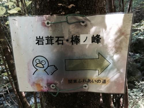 棒ノ折山13