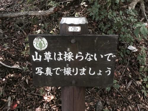 棒ノ折山20