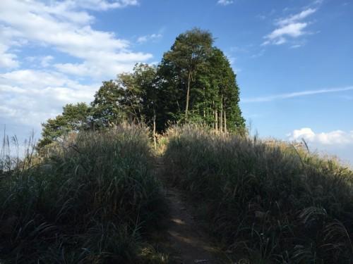 棒ノ折山33