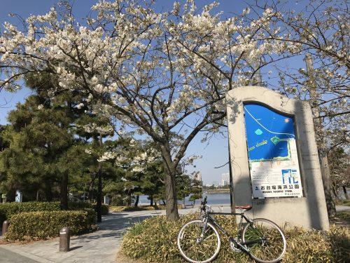 桜サイクリング1