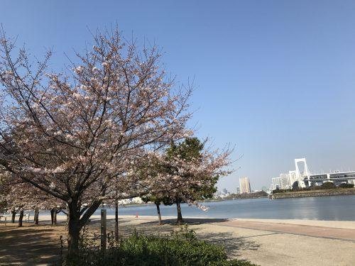 桜サイクリング2
