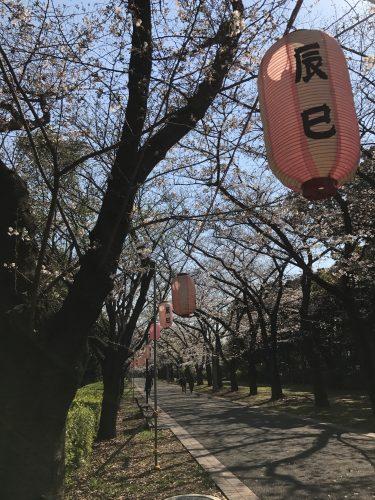 桜サイクリング3