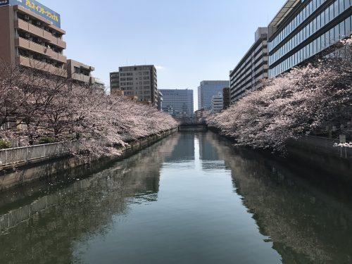 桜サイクリング6