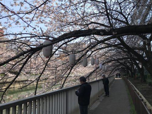 桜サイクリング7