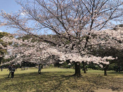 桜サイクリング16