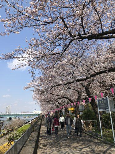 桜サイクリング20