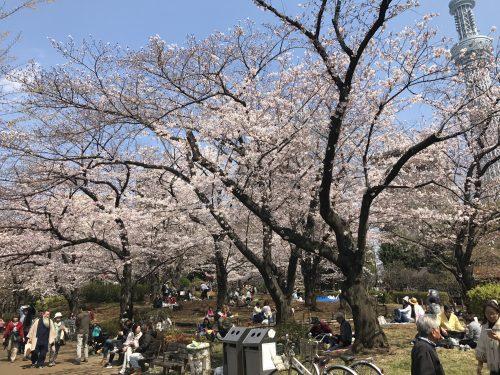 桜サイクリング21