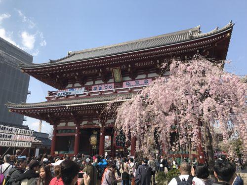 桜サイクリング25