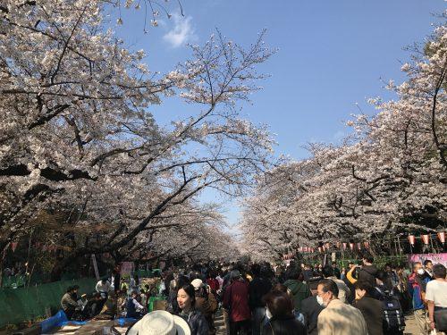 桜サイクリング26