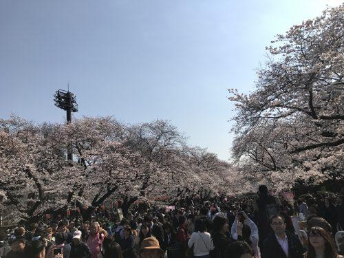 桜サイクリング27