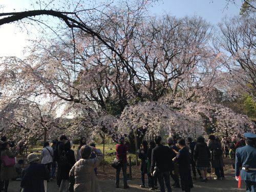 桜サイクリング29