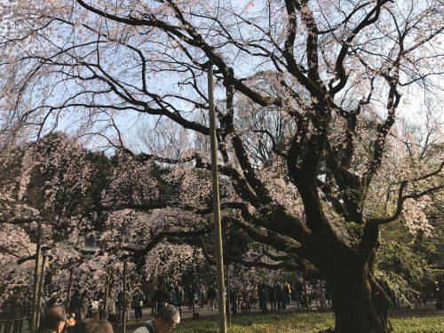 桜サイクリング31