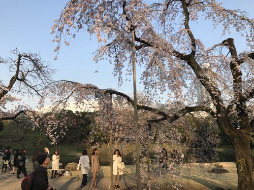 桜サイクリング39