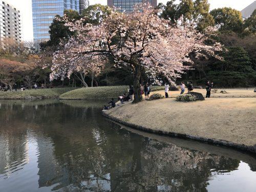 桜サイクリング40
