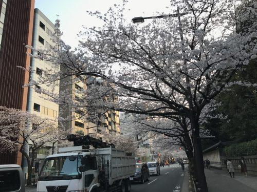 桜サイクリング46