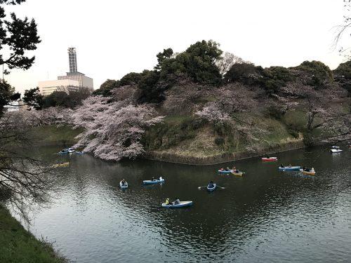 桜サイクリング47