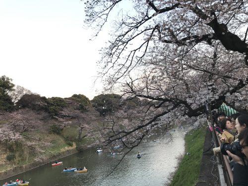 桜サイクリング48