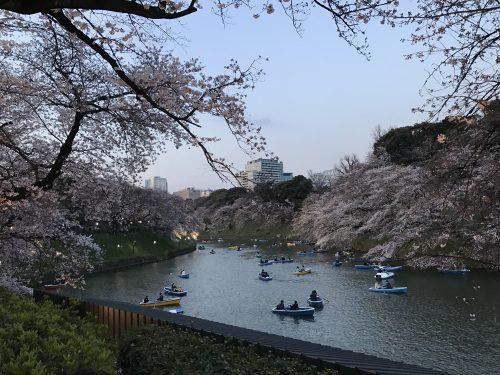桜サイクリング49
